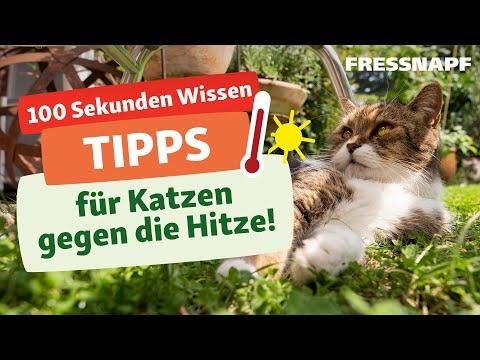 Tipps für Katzen bei Hitze
