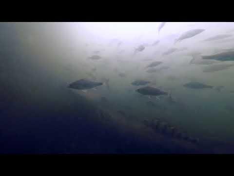 NPS Fishing - Lake DeForest, Clarkstown, NY, USA
