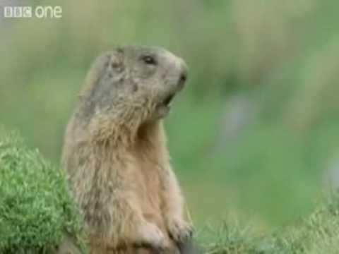 Video: Gyvūnų gyvenimas - Kartais nesiskiria nuo žmonių
