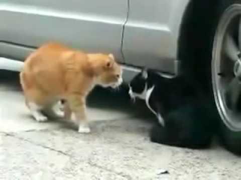 Video: Ne Tik žmonės moka kalbėti.. -