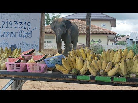 ออมสิน-โต้โต้-อยากกินกล้วย-เมต