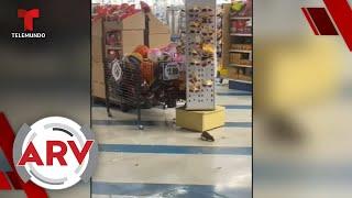 Aterrador: ratas se pasean libremente por estantes de una tienda   Al Rojo Vivo   Telemundo