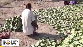 Tendu leaves growers get means of livelihood back amid lockdown 4.0 - INDIATV