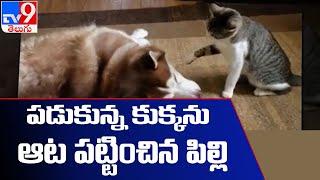 Funny Video : Cat attacks sleeping Dog.. Wakes Him Up - TV9 - TV9