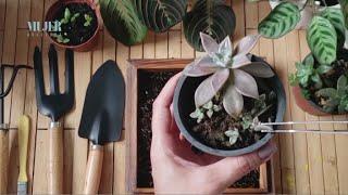 Mundo jardín: Conoce las herramientas adecuadas para entrar al mundo de las plantas