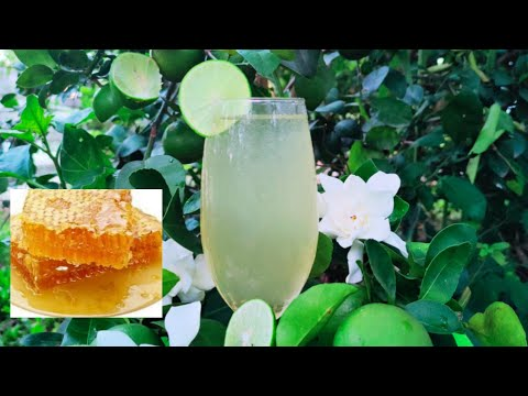 น้ำมะนาวน้ำผึ้งสดๆจากต้น-Honey