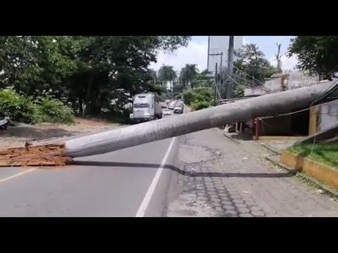 Palmera de más de 100 años cae sobre carretera provocando daños materiales