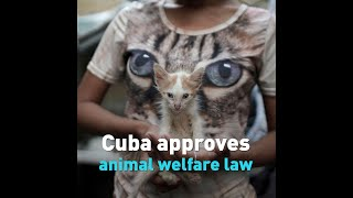Cuba approves animal welfare law