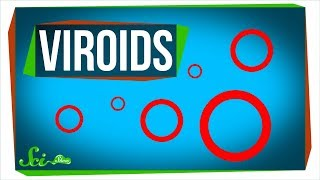 Viroids: Possibly the Smallest Pathogens on Earth