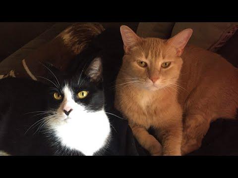 Vlog 13- Felines in FarleyWood - My Movie Star Cats