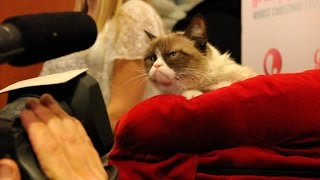 CNET gets one-on-one time with the famed Grumpy Cat