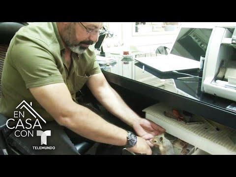 Pequeña ardilla trabaja como guardia de una caja registradora en Turquía   Telemundo