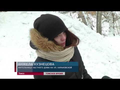 Жителей улицы Харьковской беспокоит свора бездомных собак