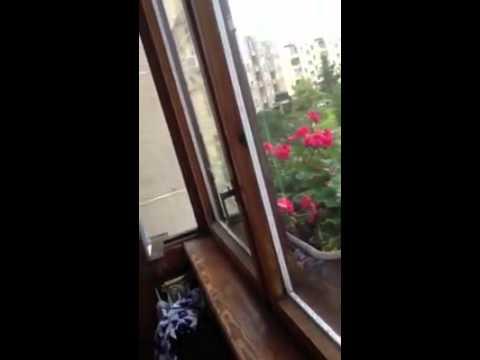 Video:           Alekna           - Parodija atgimsta