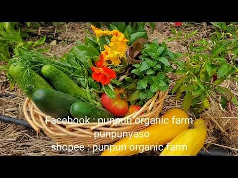 การเก็บผักในสวนให้กินได้นาน