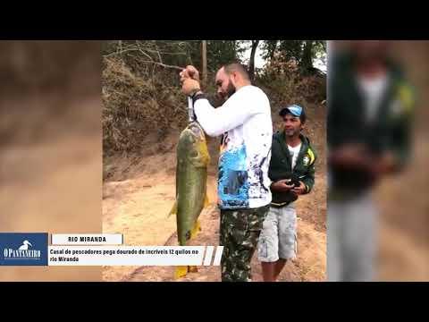 Casal de pescadores pega dourado de incríveis 12 quilos no rio Miranda