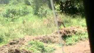 Leopard in Lake Nakuru National Park