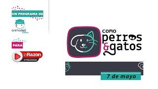 Como perros y gatos: perritos comunitarios 07-05-21