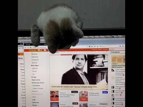 Котенок тоже интересуется Чувашским народным сайтом