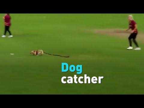 Dog invades cricket match