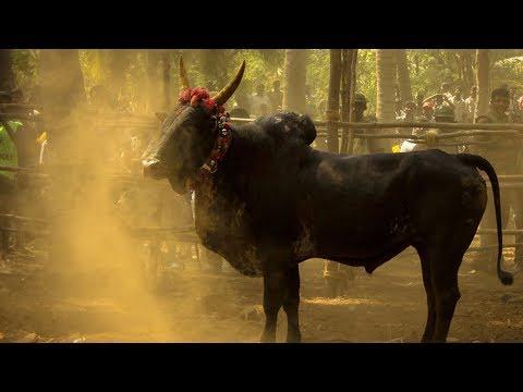 connectYoutube - Vaa Maa Minnalu Vandhidhichu Pongal Tamil Song