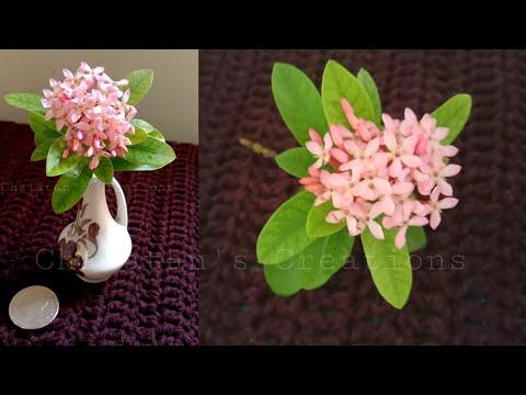 Pink-Ixora-hybrid-flowers-ดอกเ