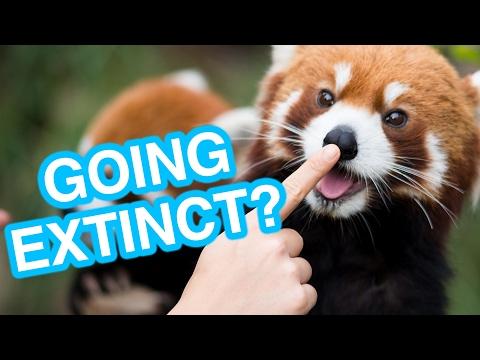 7 Cute Animals That Might Go Extinct