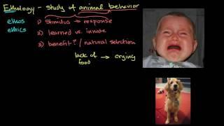 Ethology and animal behavior