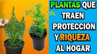 Quitaras todo el mal de tu vida y atraerás la Riqueza estas Plantas no deben faltar en tu hogar