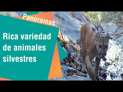 Rica variedad de animales silvestres en Costa Rica   Panoramas