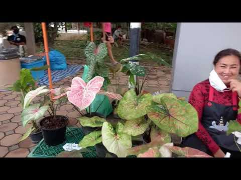 #ตลาดนัดต้นไม้สิงห์บุรี