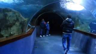 Places Aquarium Donostia San Sebastian