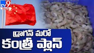 రొయ్యల దిగుమతులపై చైనా కుట్రలు - TV9 - TV9