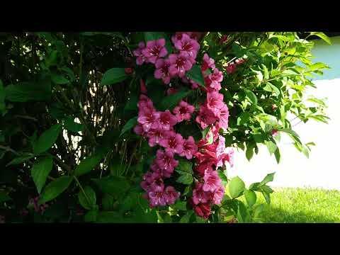 มาชมดอกไม้สวยๆสีสันต์สวยงามต่า
