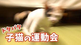 子猫 走り回る『部屋中大暴れ!ト?タハ?タ子猫の運動会』などなど