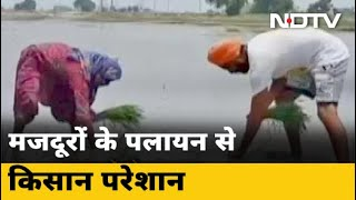 COVID-19 News: Punjab में मजदूरों के पलायन से किसानों की मुश्किलें बढ़ी - NDTVINDIA
