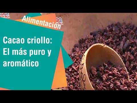 Cacao criollo: El más puro y aromático | Alimentación Sana