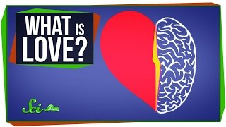 World's Most Asked Questions: What Is Love?