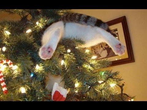 Czy Twój Kot Chce Cię Zabić Na święta Czyli Bożonarodzeniowy Horror