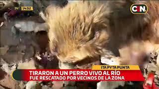 Tiraron a un perro vivo al río en Itá Pytã Punta