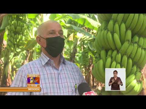 Cuba: Fomentan desarrollo agrícola en Ciego de Ávila