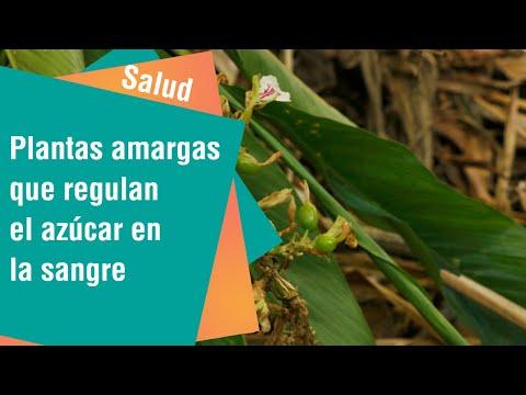 Plantas amargas que regulan el azúcar en la sangre   Salud