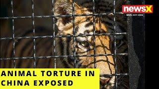 Horrifying animal torture in China exposed | NewsX - NEWSXLIVE