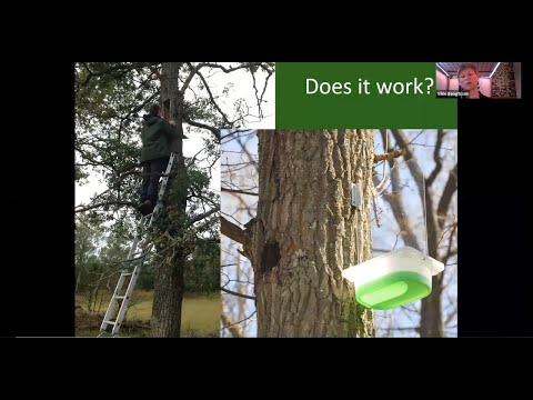 Webinar: Funeral forests and tortured trees (With Andreas Bernasconi & Vikki Bengtsson)