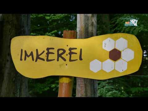 Zoo Rostock | Teil 1: Die Historie der Honiggewinnung