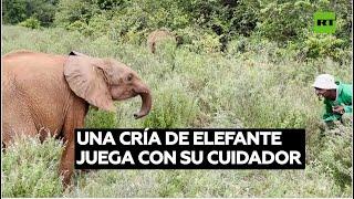 Un elefantito huérfano se divierte con su cuidador