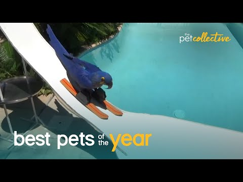 Top 20 Athletic Pets | Best Pets Of The Year 2020
