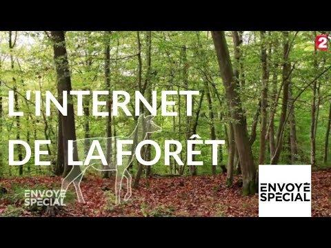 nouvel ordre mondial | Envoyé spécial. L'internet de la forêt - 26 octobre 2017 (France 2)