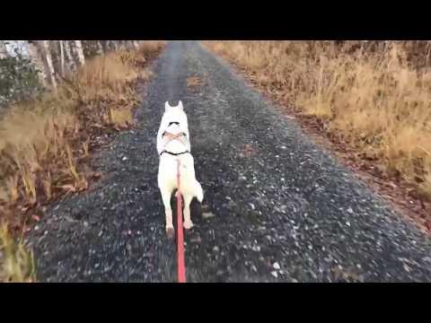 Utrustning - Spring med din hund!