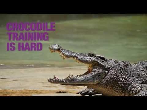 E-ZPass Crocodile